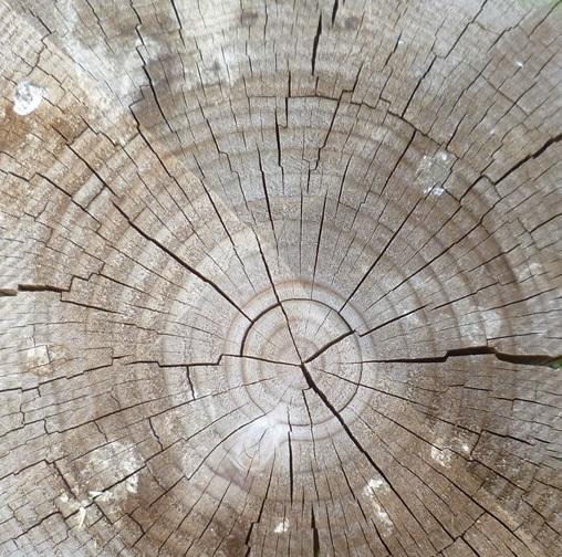 wood crack repair timber section